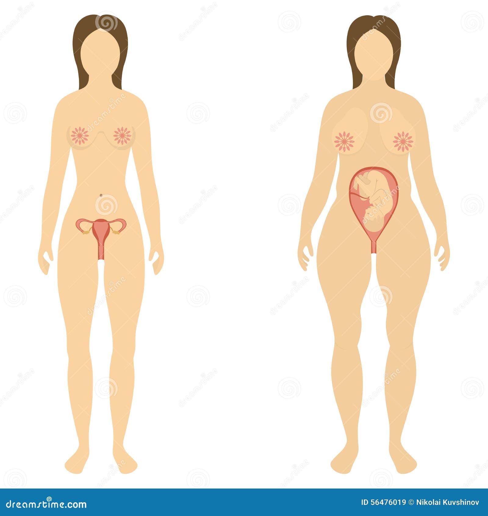La femme avant et pendant la grossesse