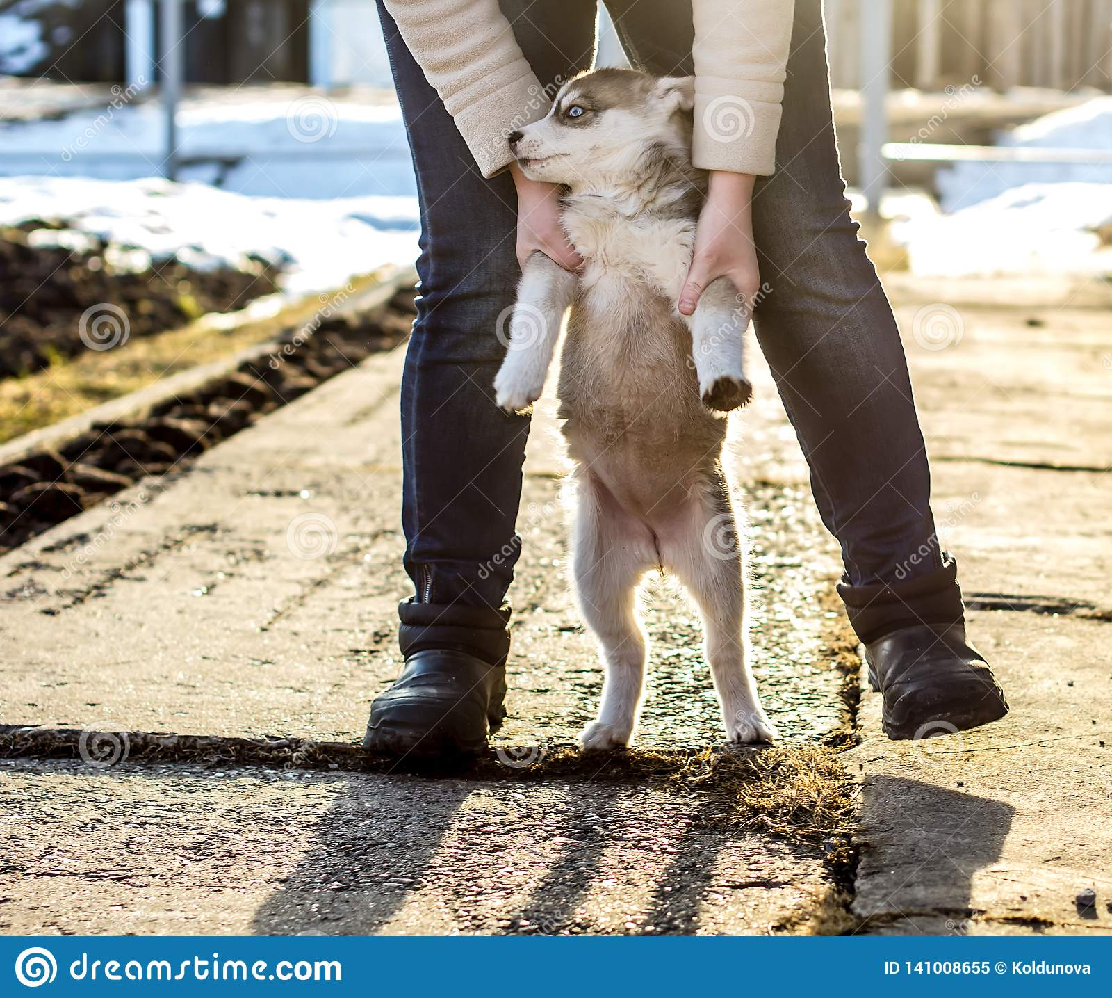 La femme joue avec son petit chiot mignon et agité du chien de traîneau sibérien et le mène sur ses jambes de derrière, dans la p