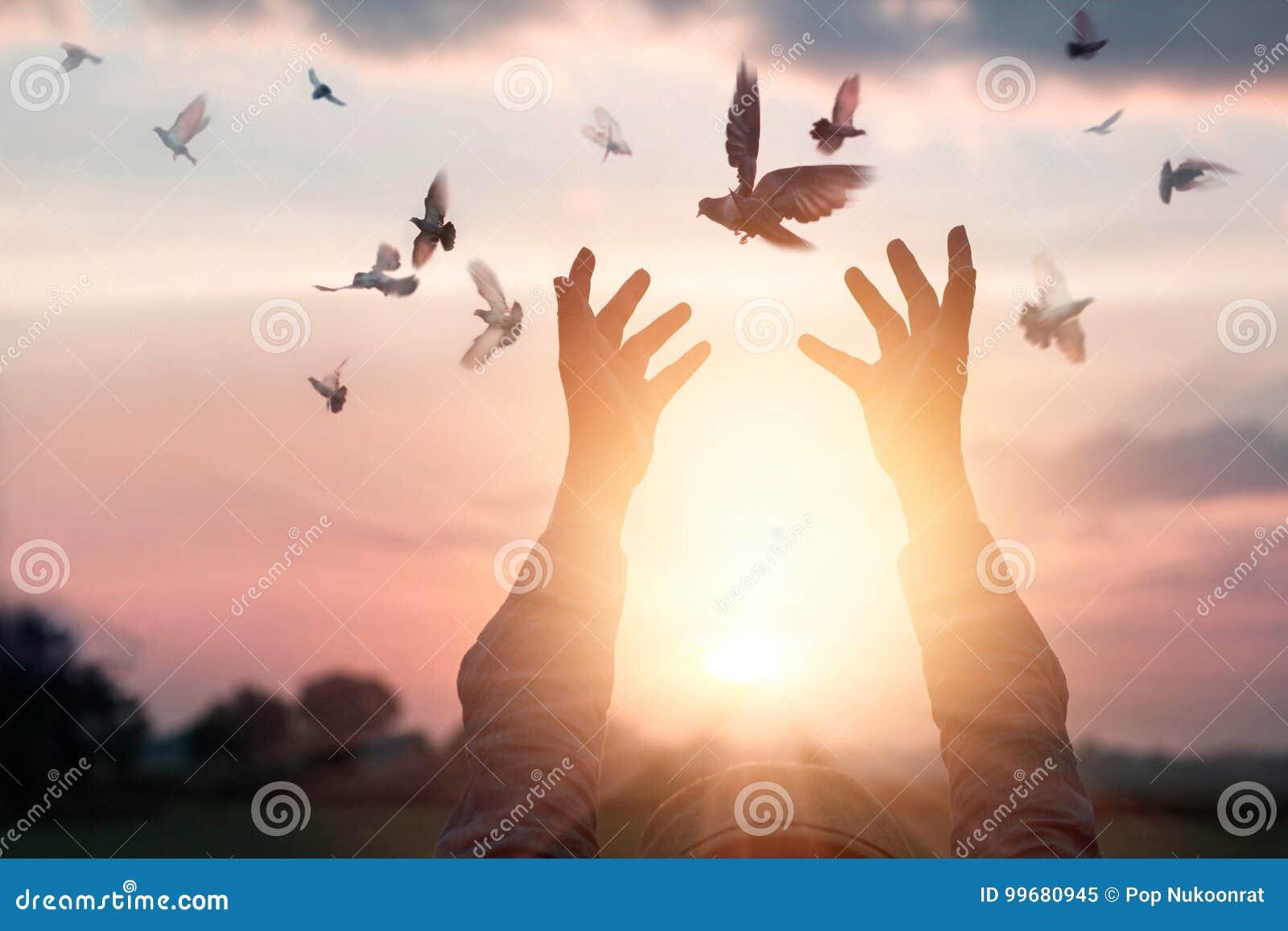 La femme priant et libèrent les oiseaux à la nature sur le fond de coucher du soleil