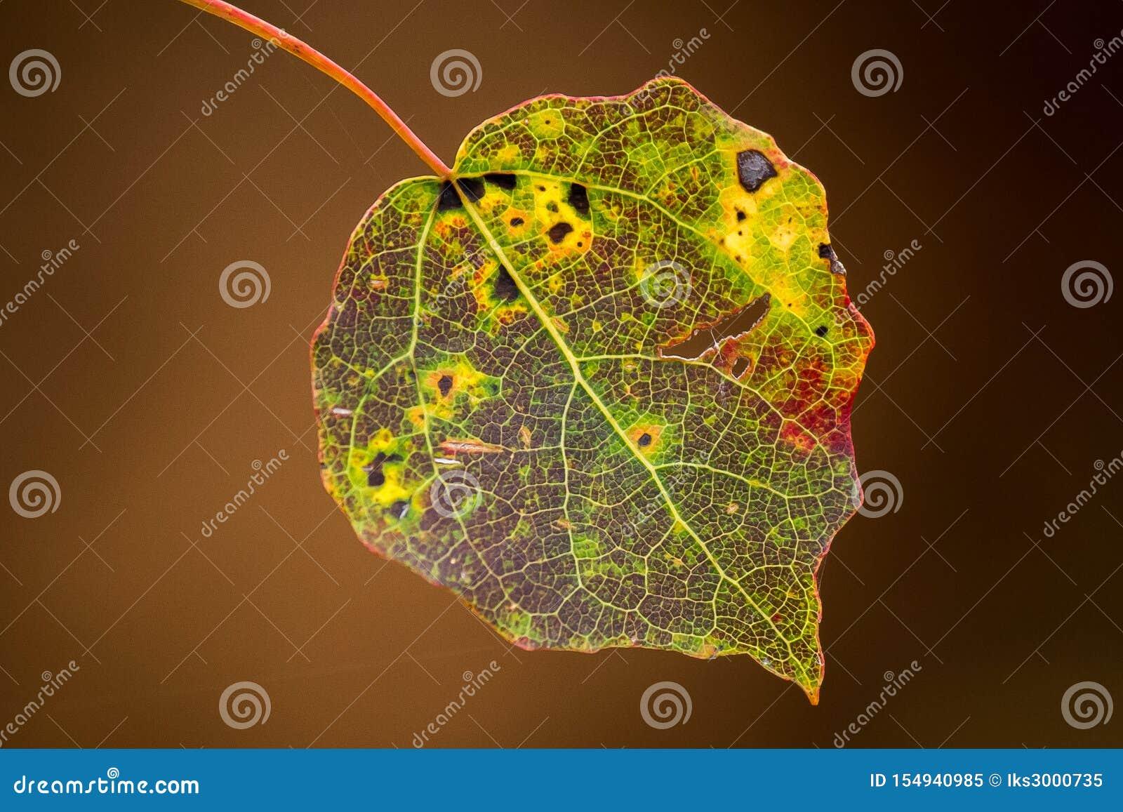 La feuille de l arbre a le modèle coloré