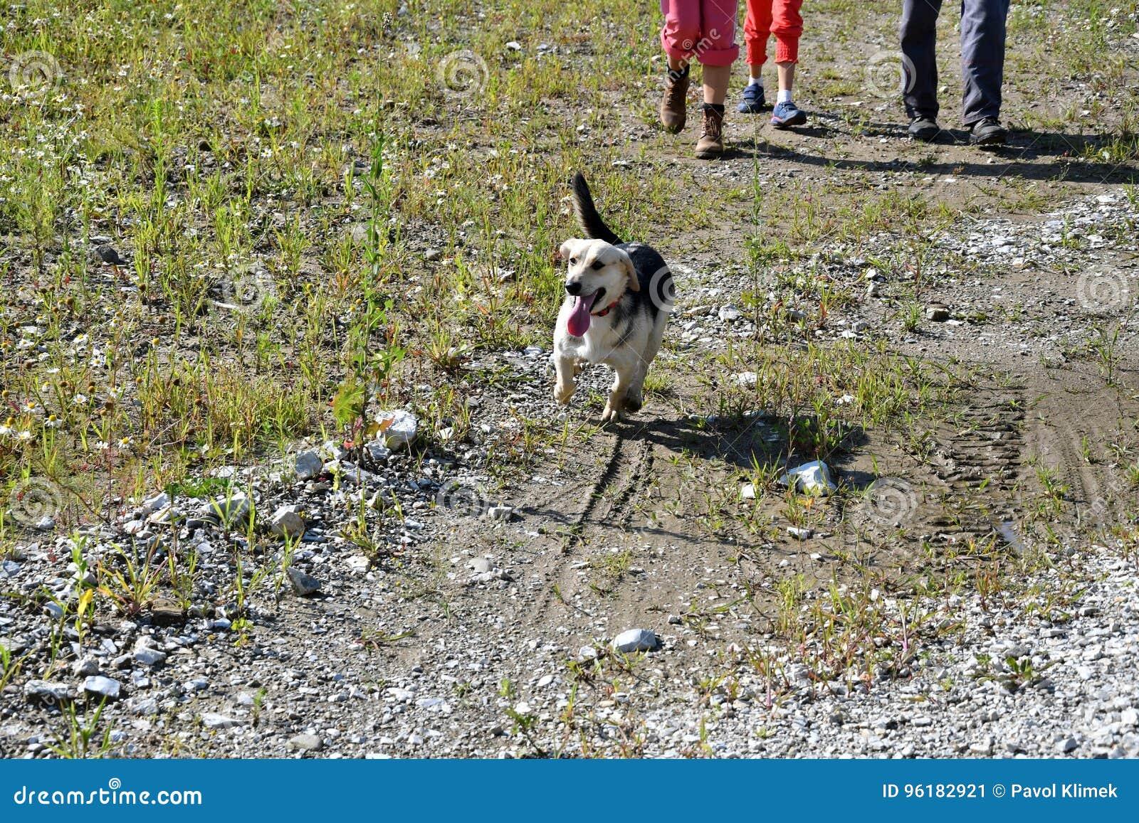 La fille jouant et s exerçant commande le chien