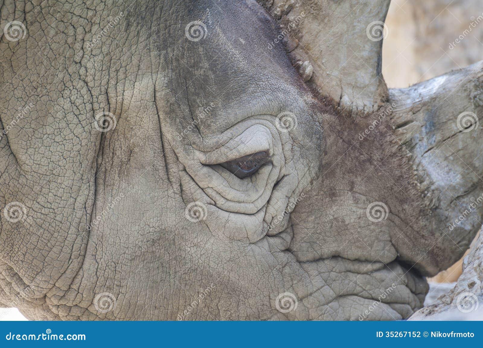 La fine del rinoceronte su