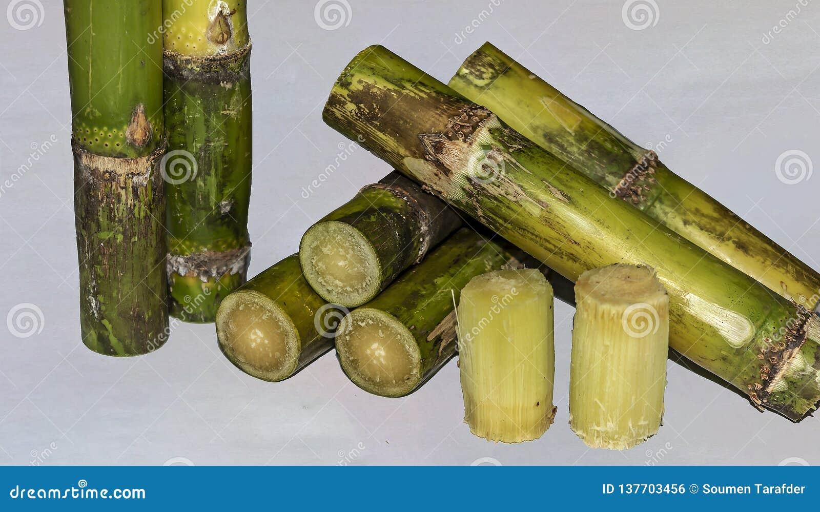 La fine ha tagliato i pezzi di Sugar Cane Isolated On White Background