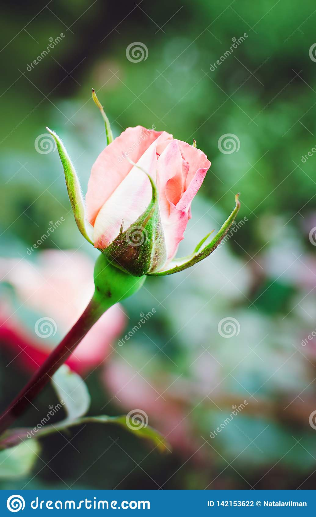 La fioritura è aumentato nel giardino, foto verticale