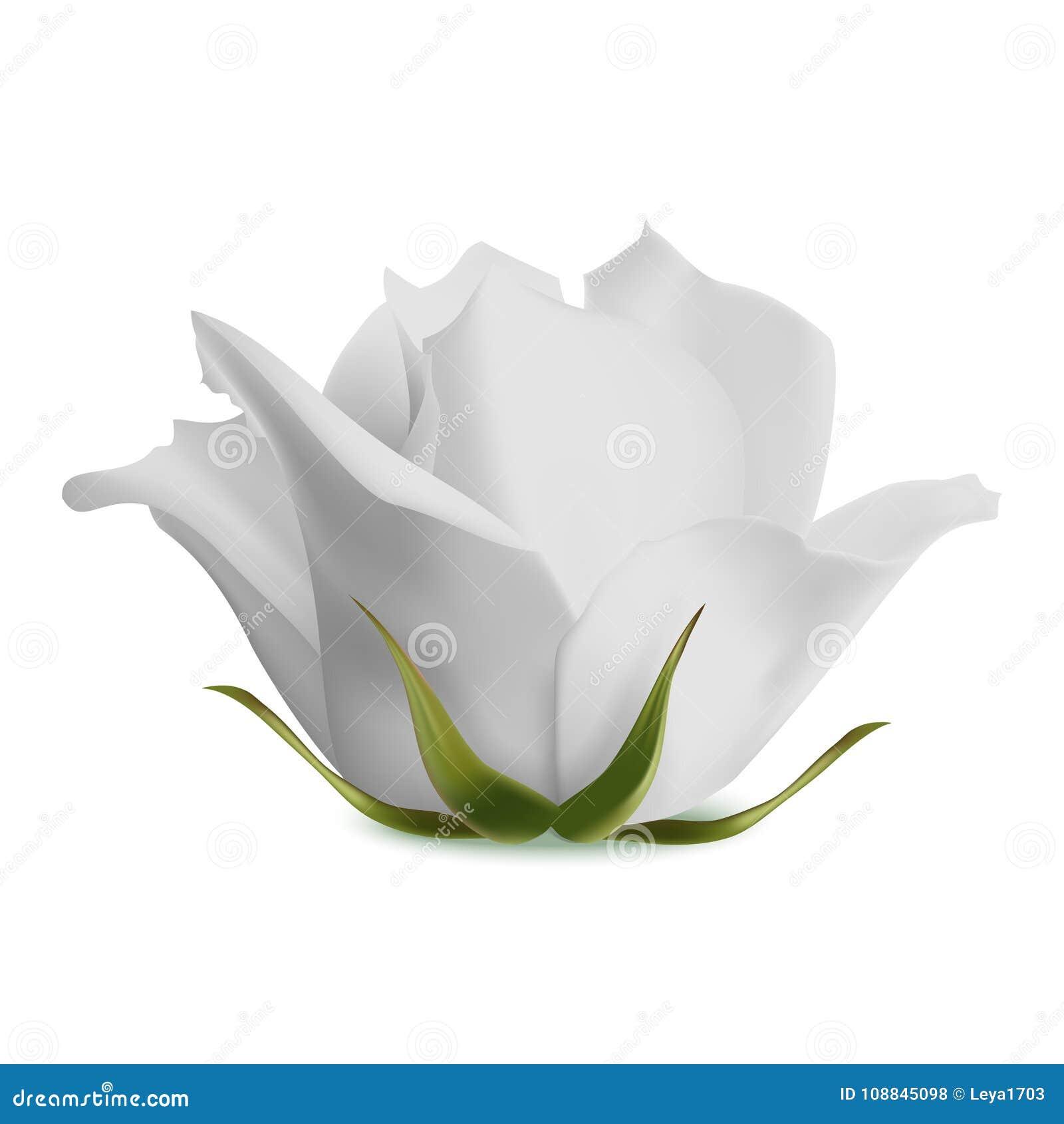 La fioritura bianca è aumentato su un fondo bianco Illustrazione di vettore