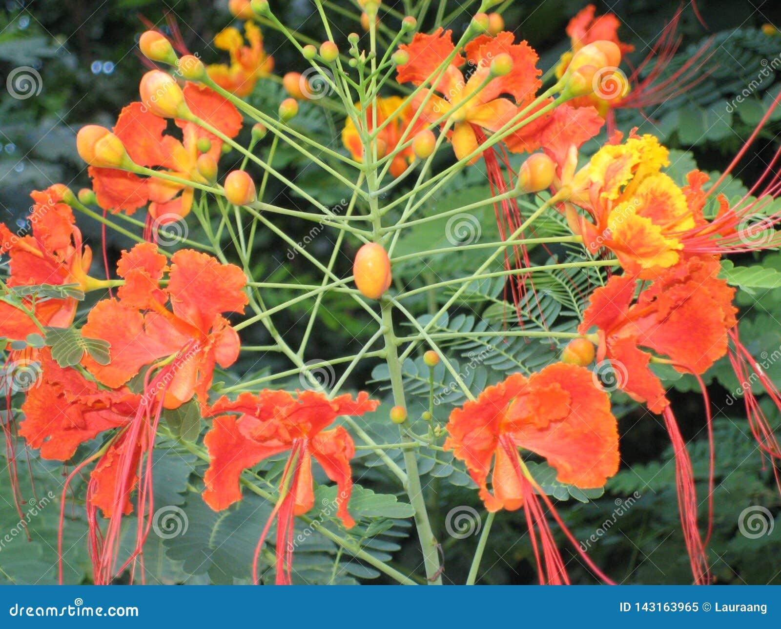 La fleur à Mexico