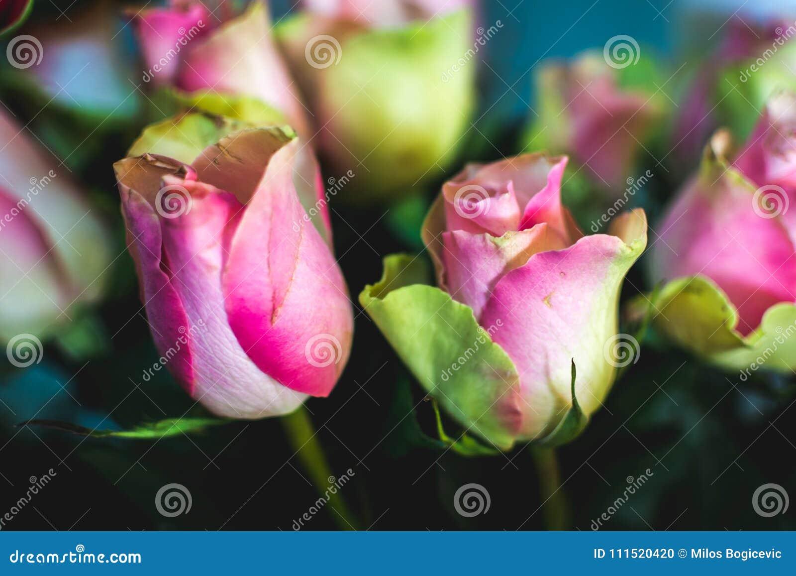 La Fleur Romantique S Est Levee Connectez Vous L Amour Fleur D Ete