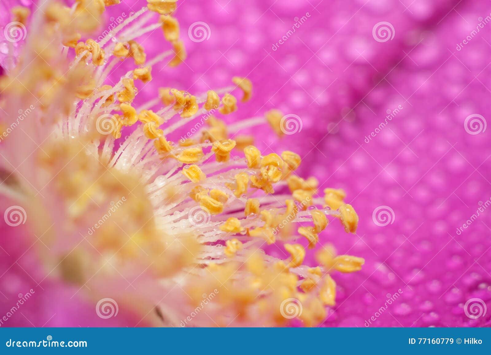 La fleur sauvage s est levée
