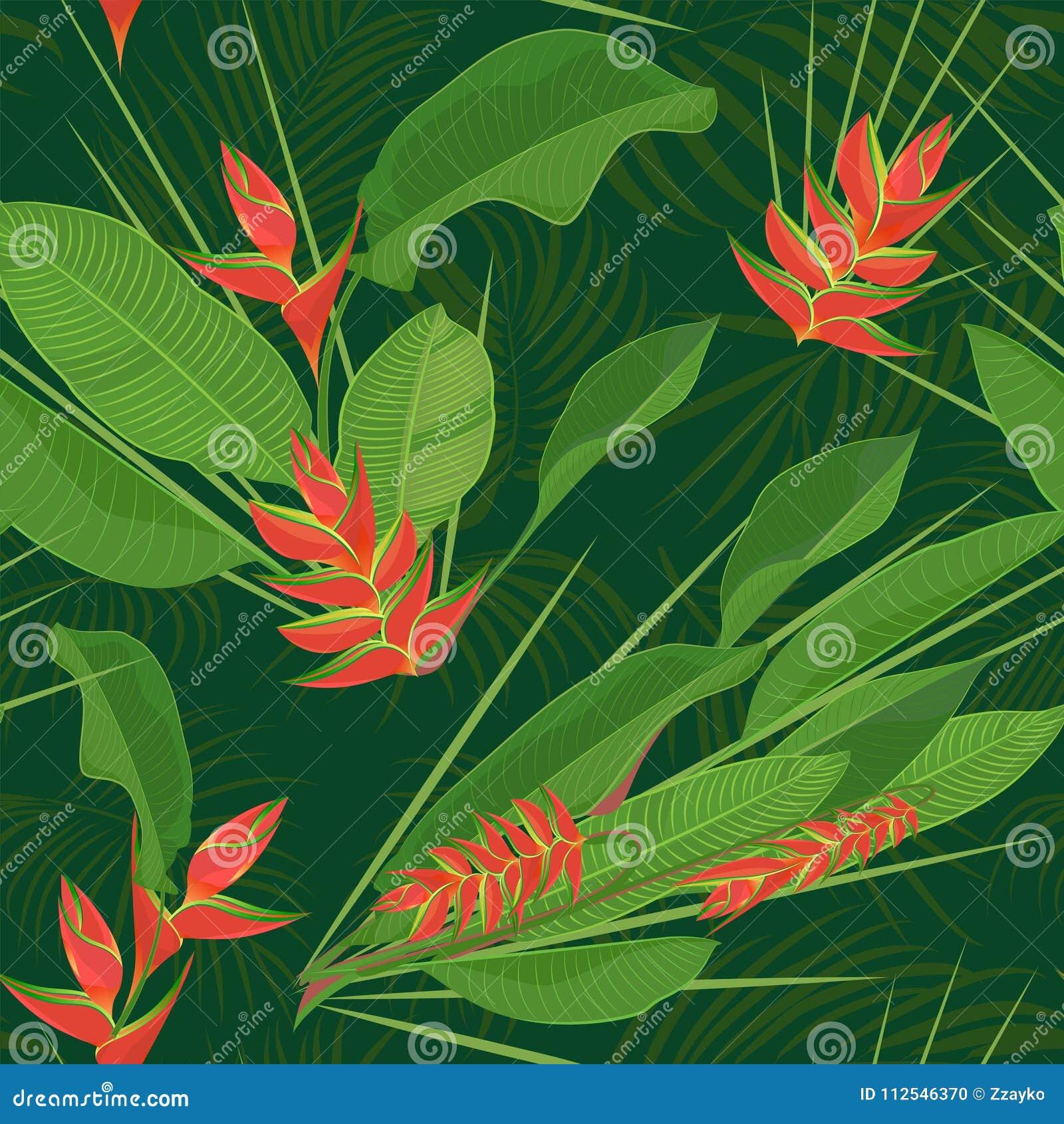 La Fleur Tropicale De Heliconia De Branche Part Du Fond Sans Couture