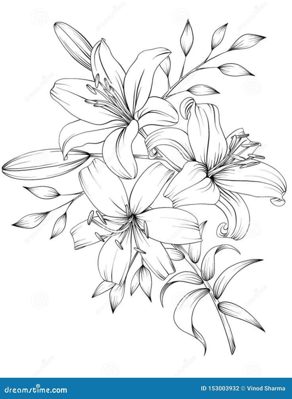 La flor del bosquejo, dibuja a lápiz el arte de la flor