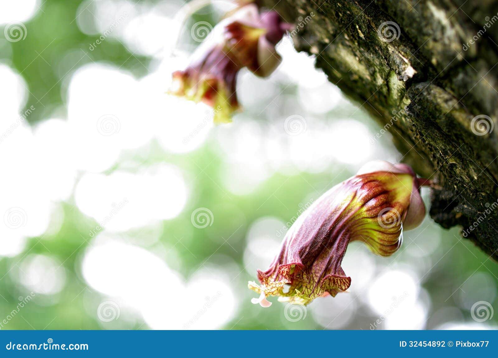 La flor mexicana de la calabaza, florece flora salvaje