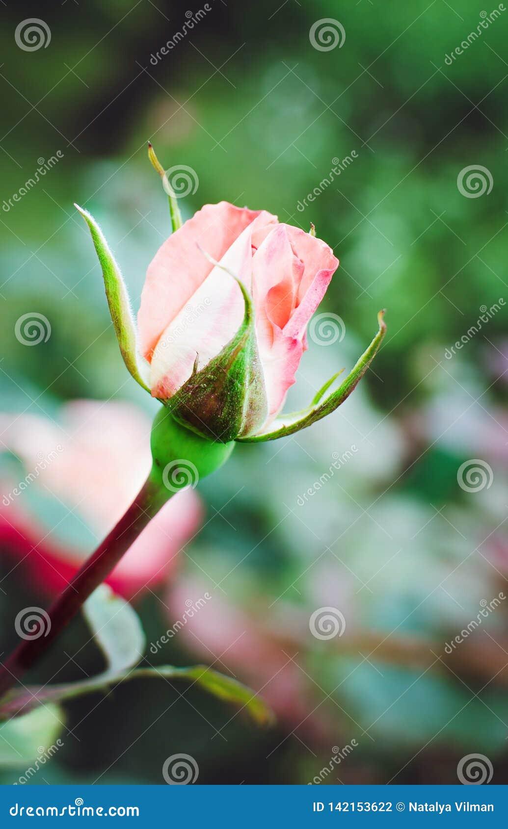La floraison s est levée dans le jardin, photo verticale