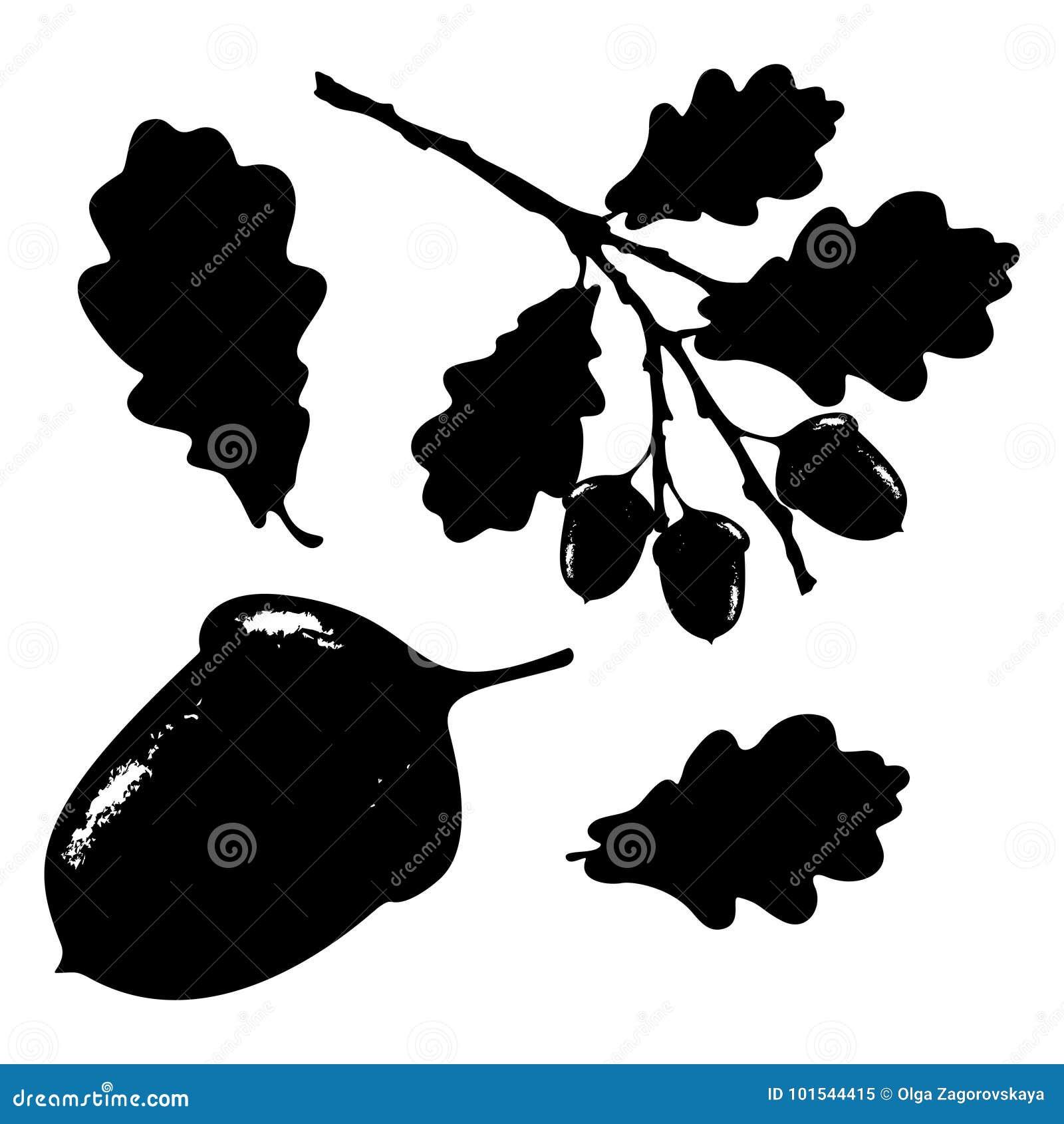 La foglia, la ghianda ed il ramo della quercia hanno isolato la siluetta, l ecologia stilizzata