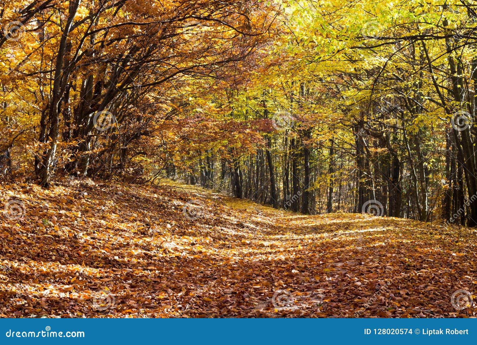 La forêt d automne, les arbres et les feuilles tombaient