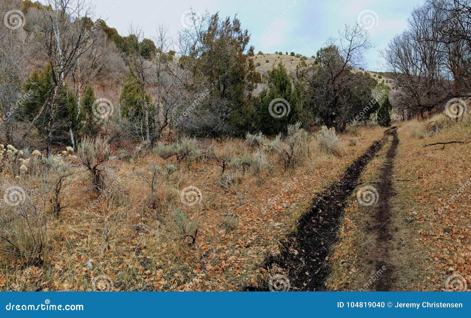 La forêt en retard de panorama d automne regarde la hausse, faisant du vélo, traîne à cheval par des arbres sur la fourchette et