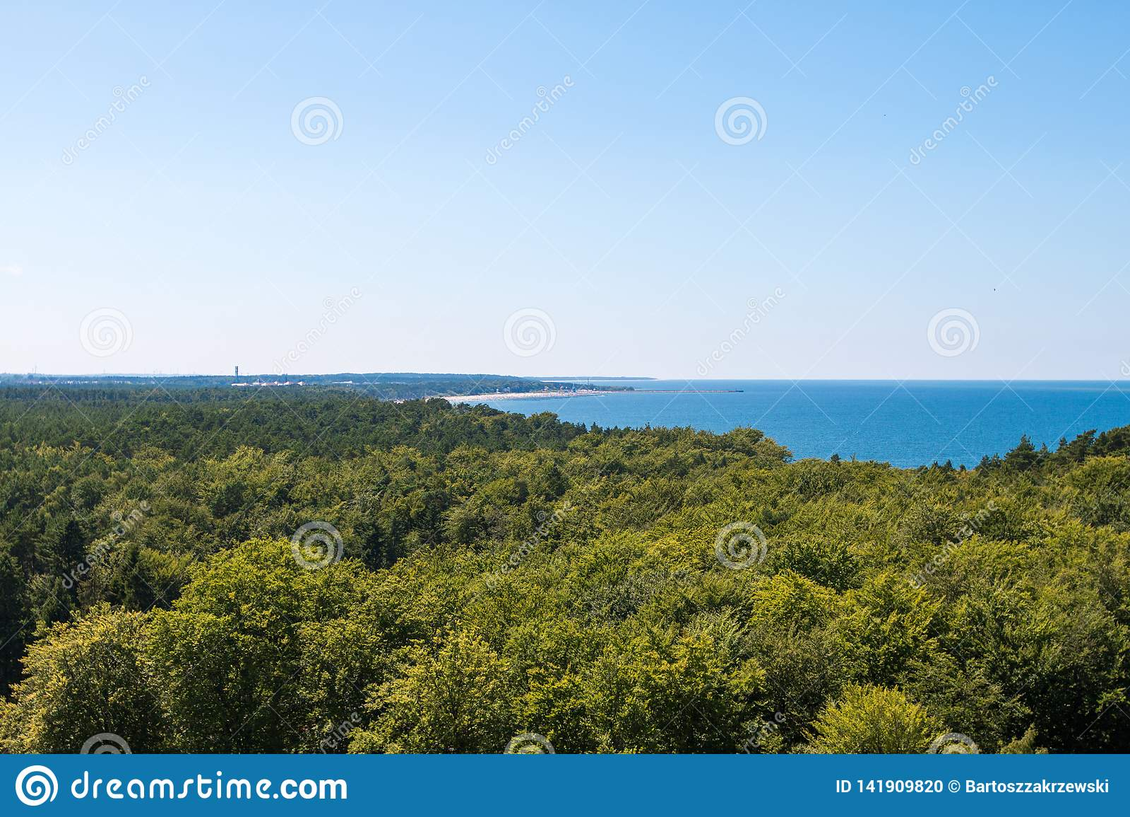 La forêt est vue pendant l été à midi