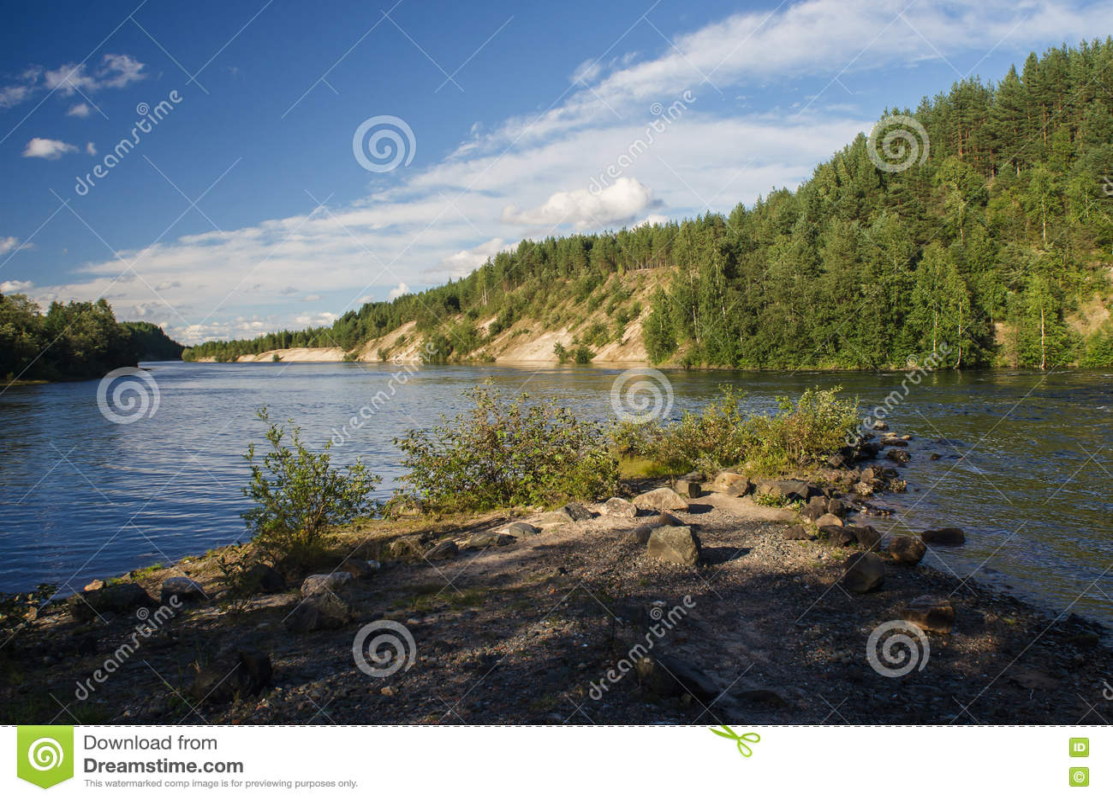 La forêt sur le lac