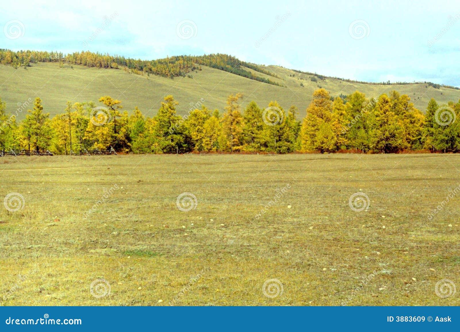 La foresta-steppa