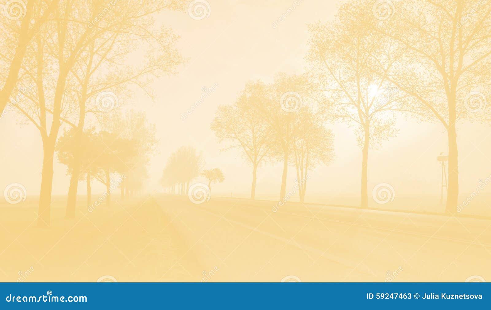La foto entonada del camino de la niebla