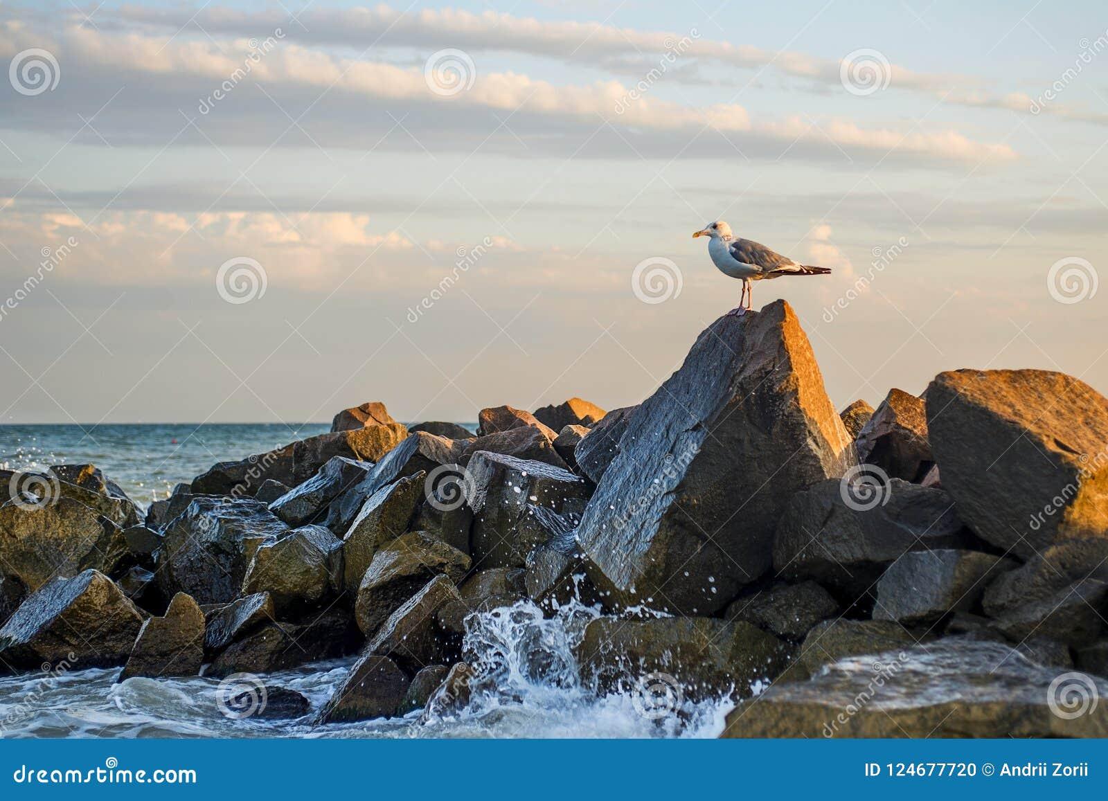La gaviota se está colocando en una piedra en el mar