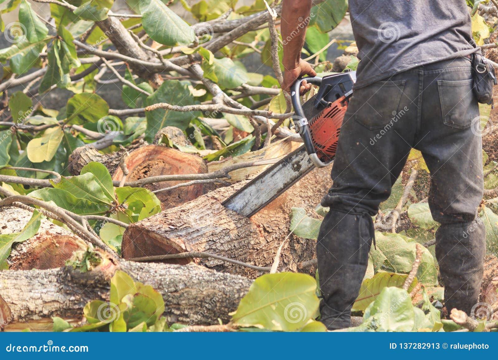La gente sta tagliando gli alberi con un motore della motosega