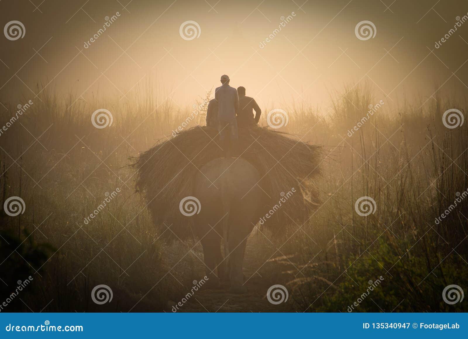 La gente transporta la hierba en elefante en el parque nacional de Chitwan en Nepal