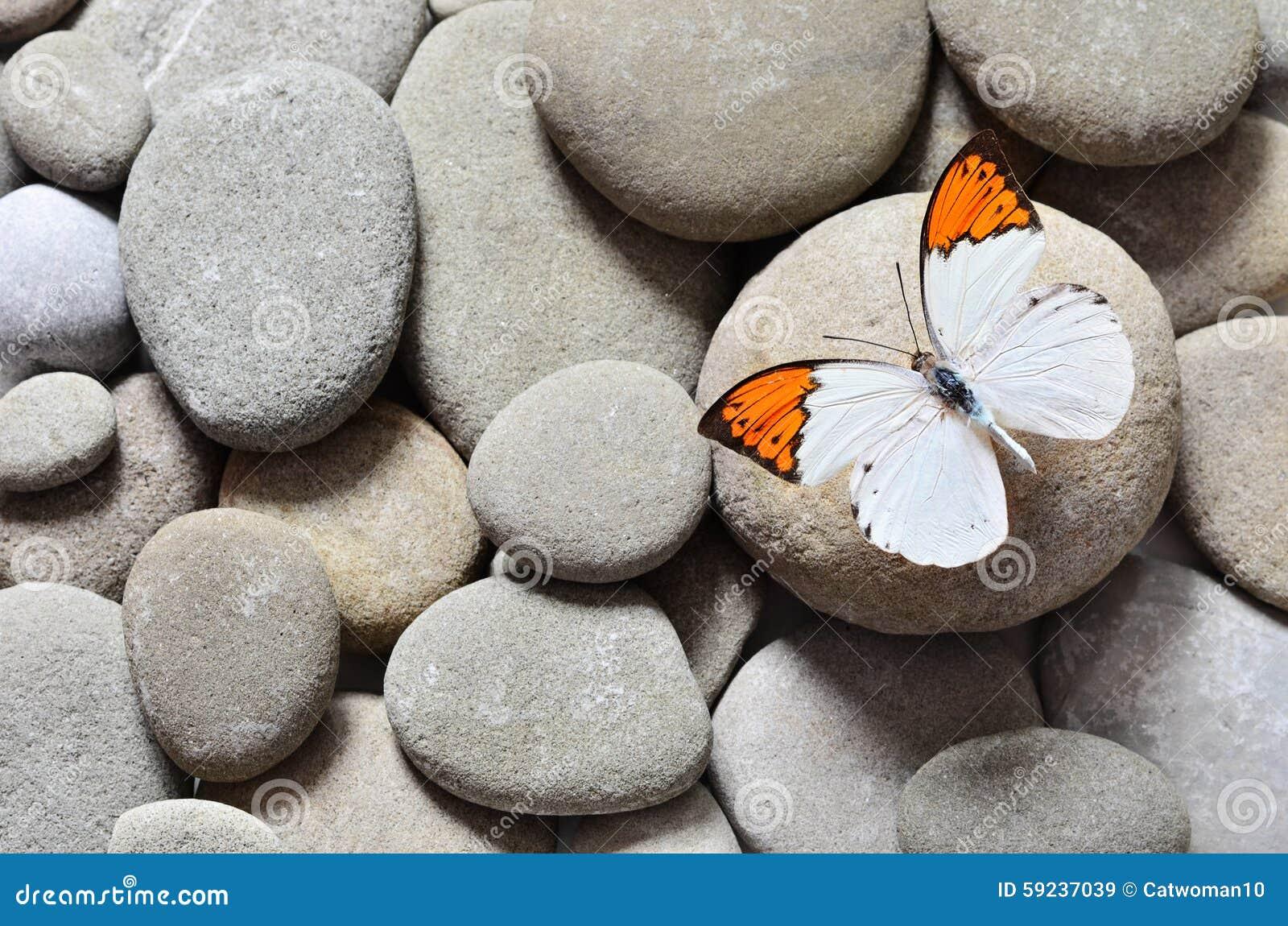 Download La Gran Mariposa En Piedras Imagen de archivo - Imagen de roca, ambiente: 59237039
