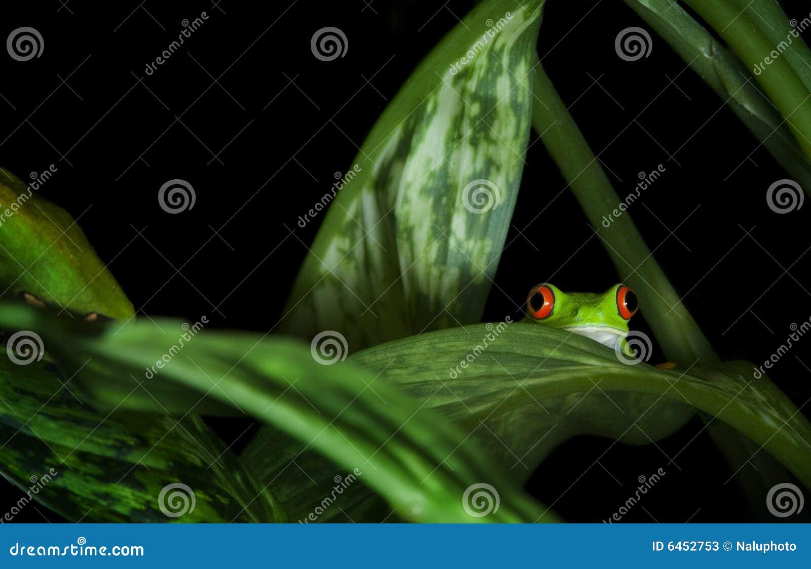 La grenouille observée plante l arbre rouge