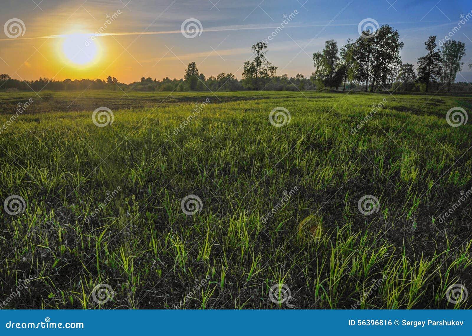 La hierba en el sol