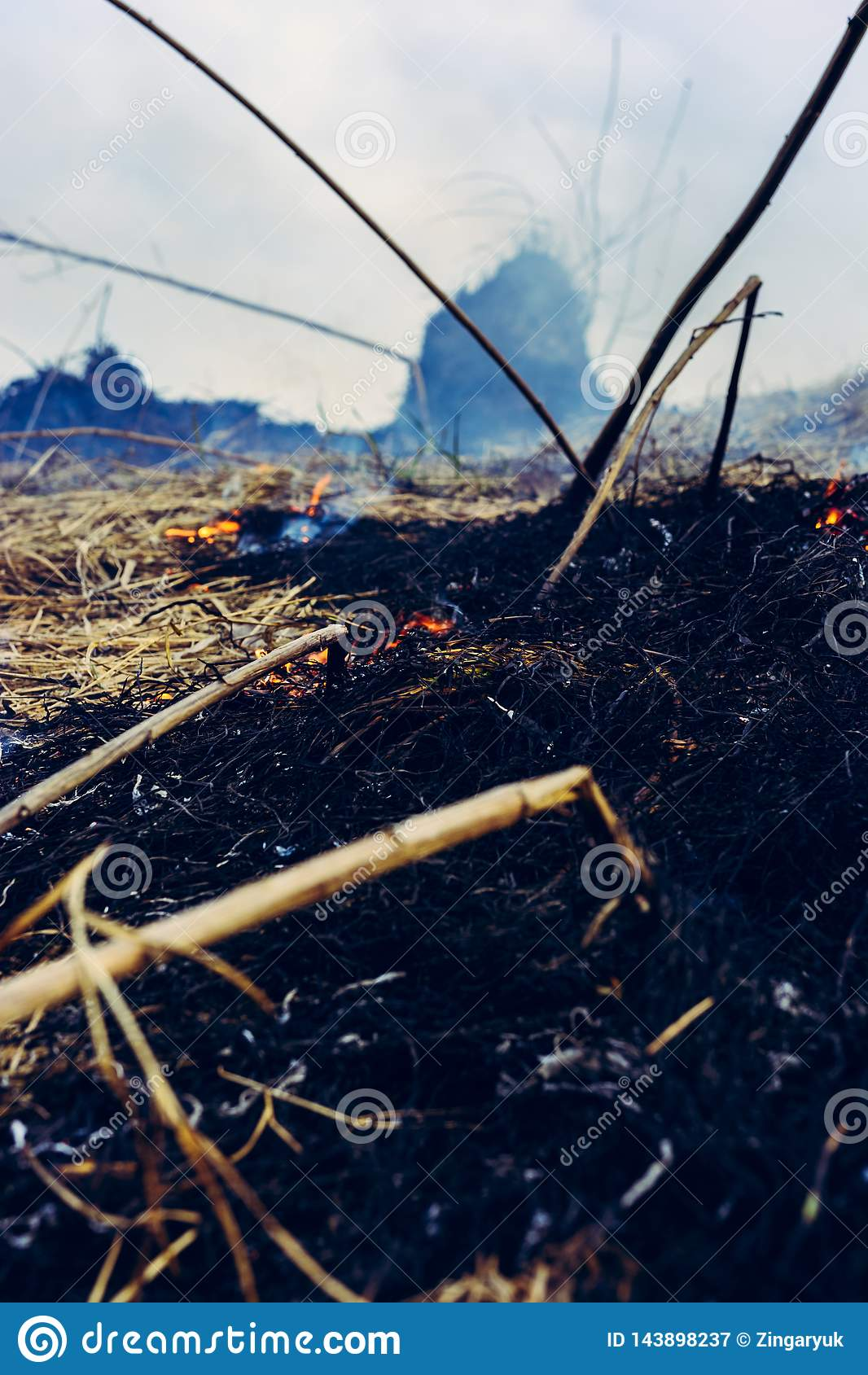 La hierba está quemando, el fuego cuyo destruye todo en su trayectoria
