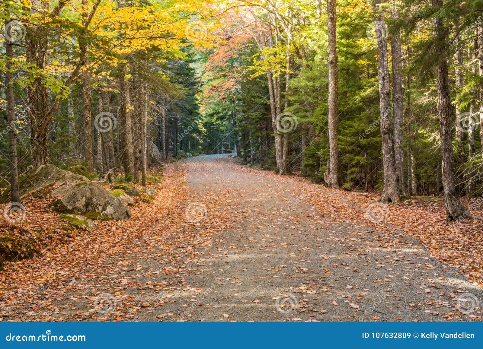 La hoja cubrió el camino de carro en Acadia