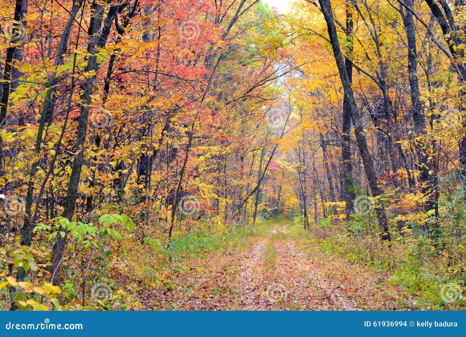 La hoja del otoño cubrió la trayectoria a través del bosque