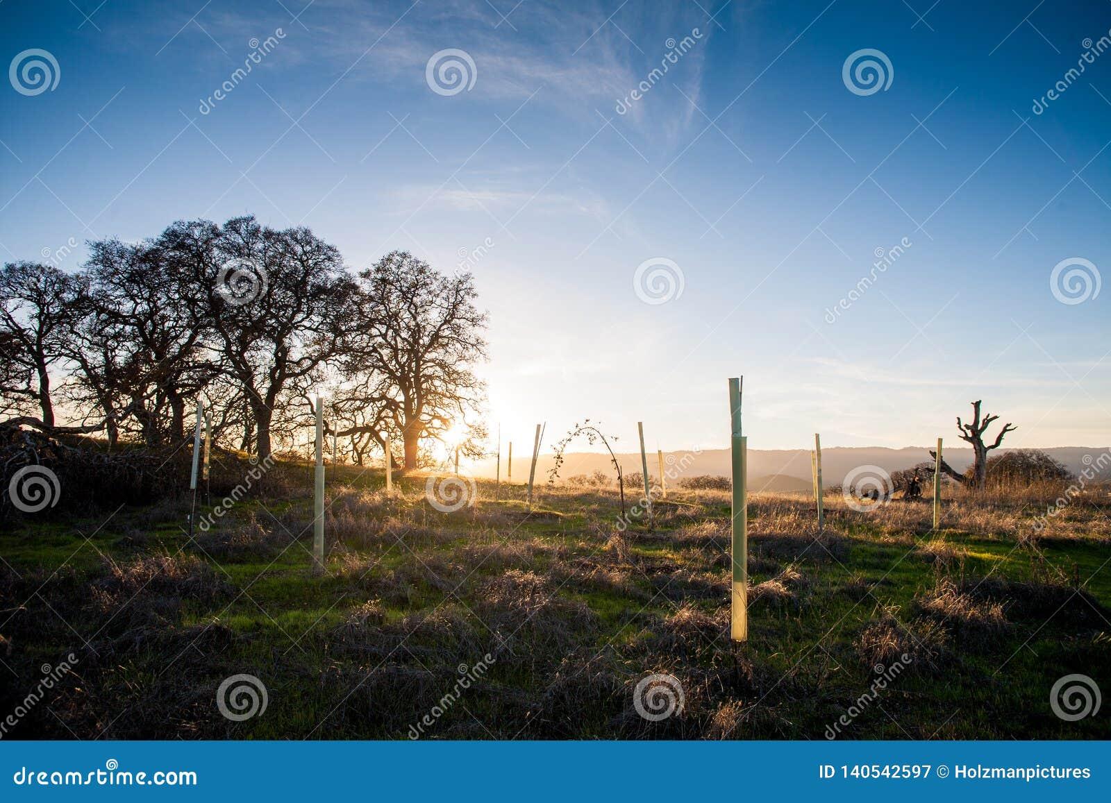 La hora de oro, el sol está fijando en el campo cerca de Stanford