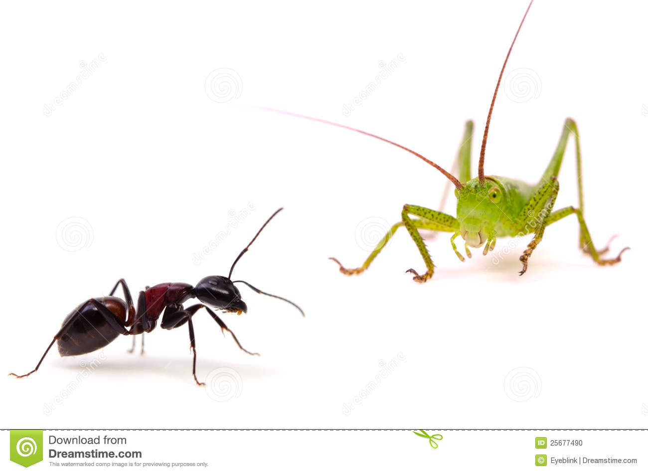 the ant and the grasshopper w Characters: three storytellers, three ants, grasshopper, owls,  (grasshopper  mimes pushing, pulling, carrying and digging with all the ants.