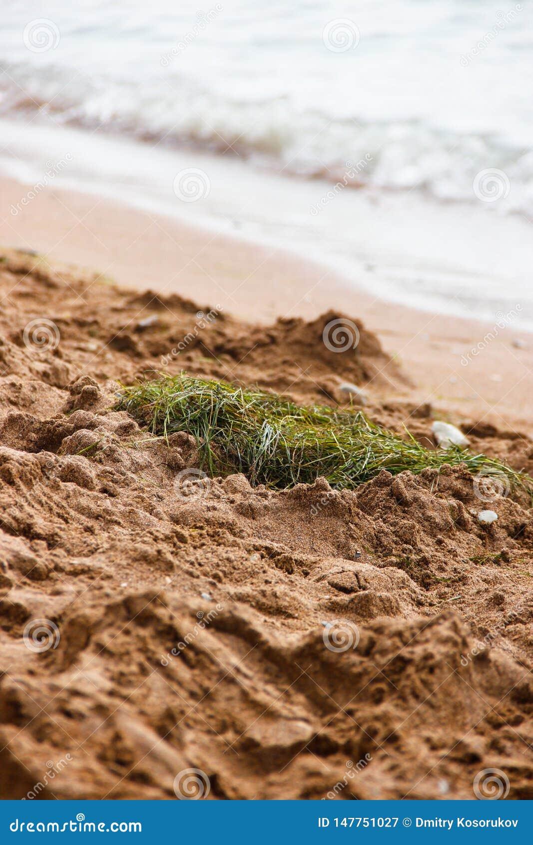 La jerarquía del pájaro en la arena por el mar