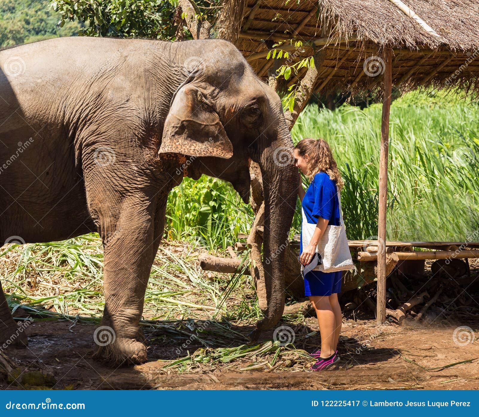 La jeune fille prend soin d un éléphant dans un sanctuaire dans la jungle de Chiang Mai