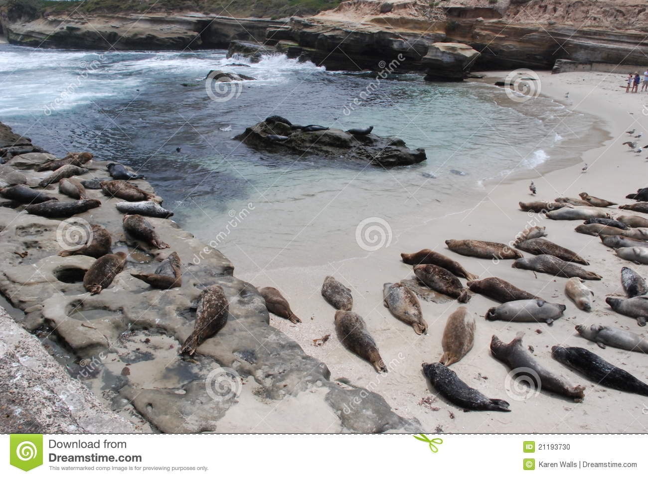 La Jolla Cove and Sea Lions Horizontal
