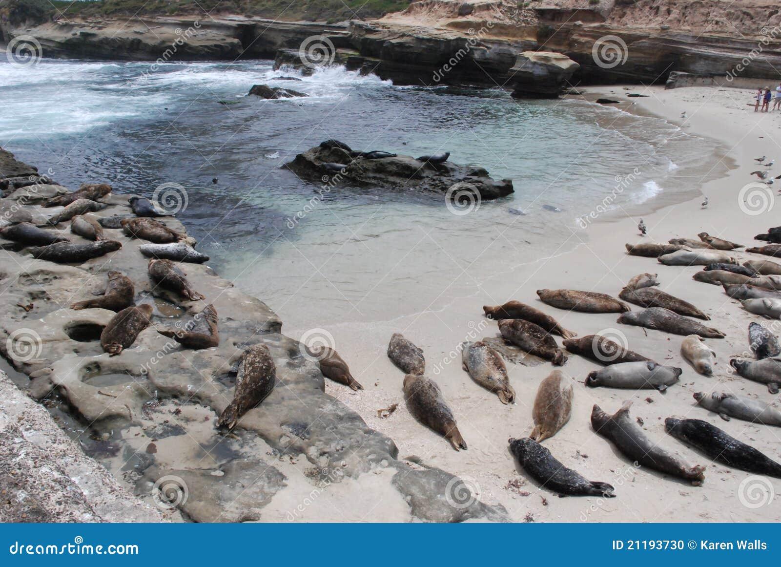 La Jolla Cove And Sea Lions Horizontal Stock Photo Image