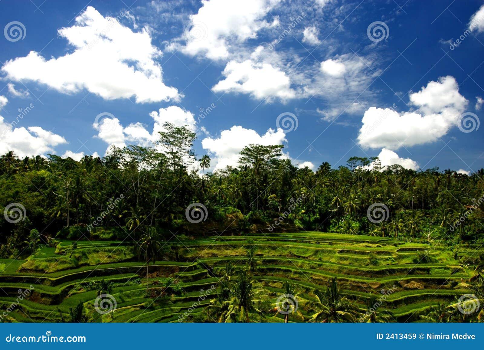 La jungle de Bali