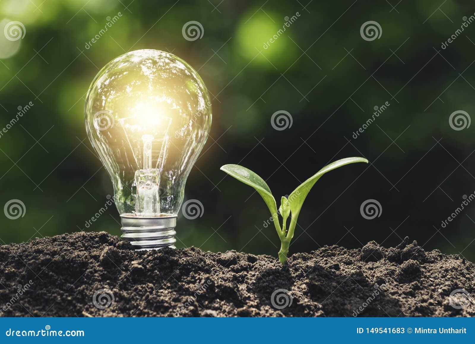 La lampadina con la plantula per il concetto di energia ha messo sopra il suolo nel fondo verde molle della natura