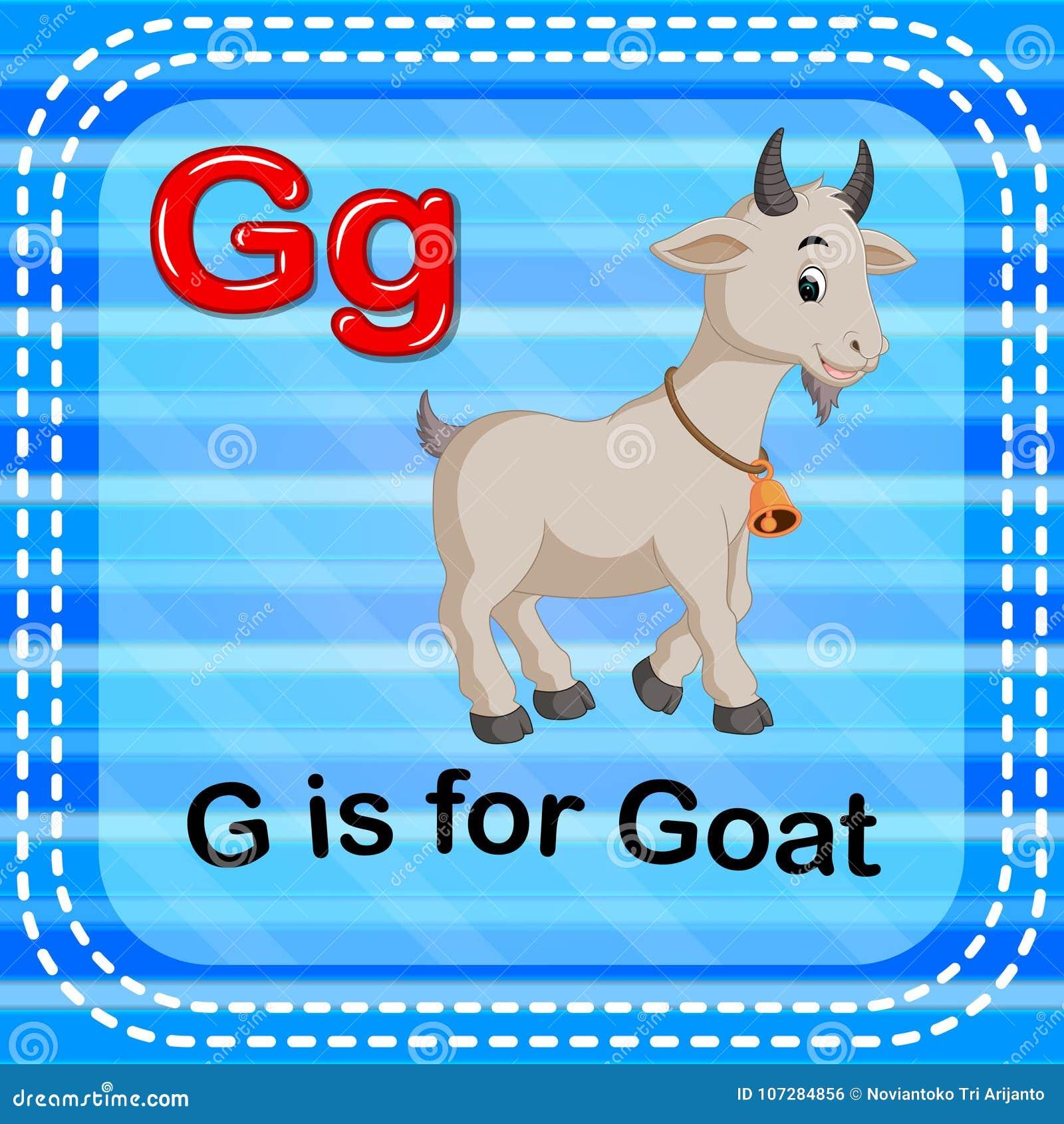 La letra G de Flashcard está para la cabra