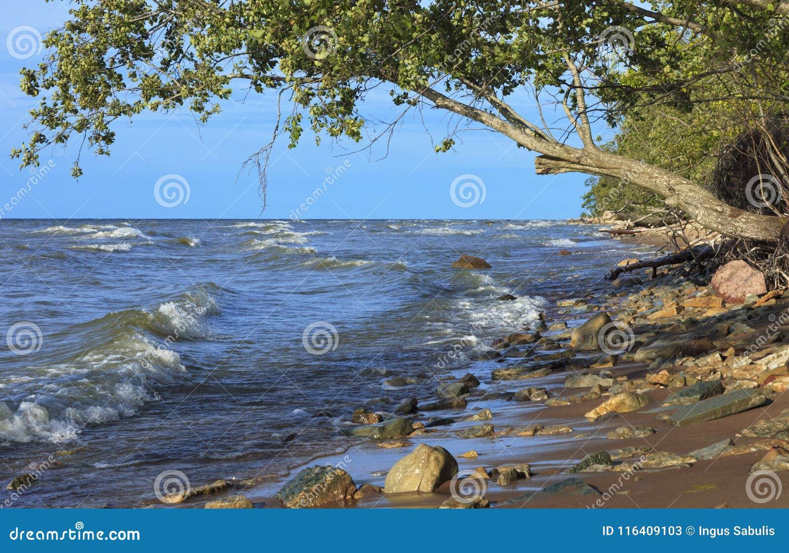 La linea costiera selvaggia del Mar Baltico in Estonia del Nord