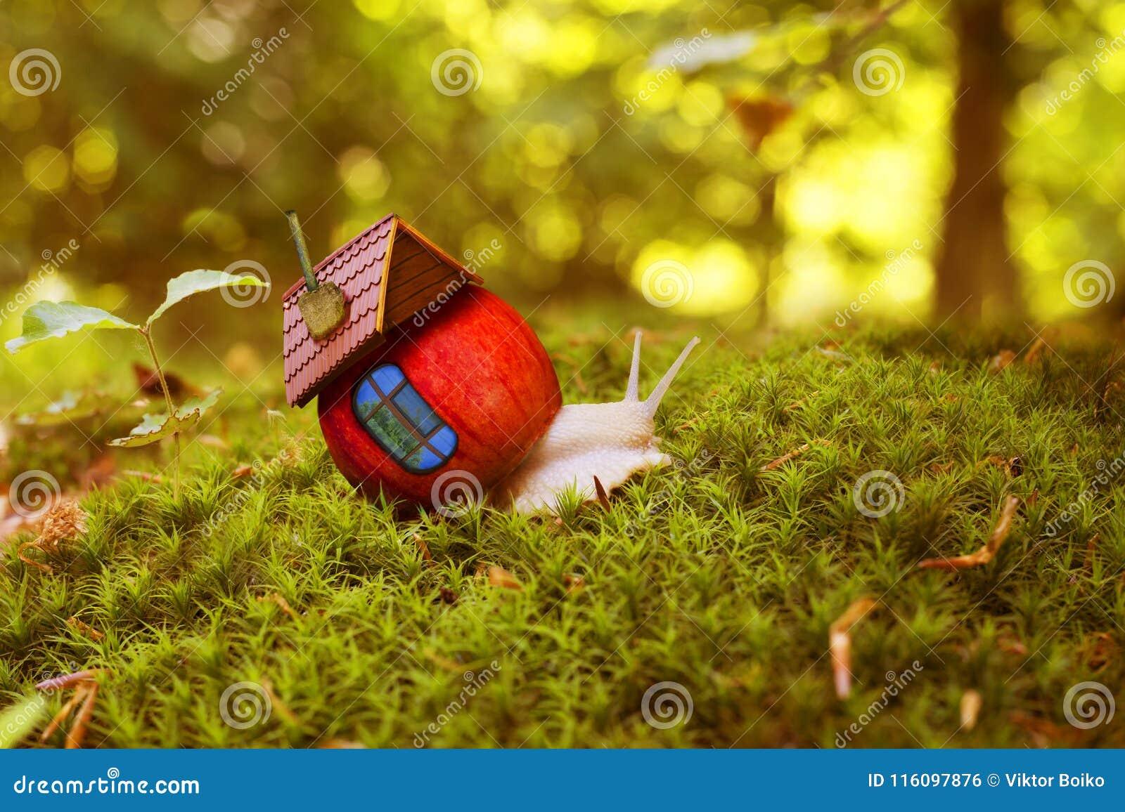 La lumaca striscia fra il muschio della foresta con una casa