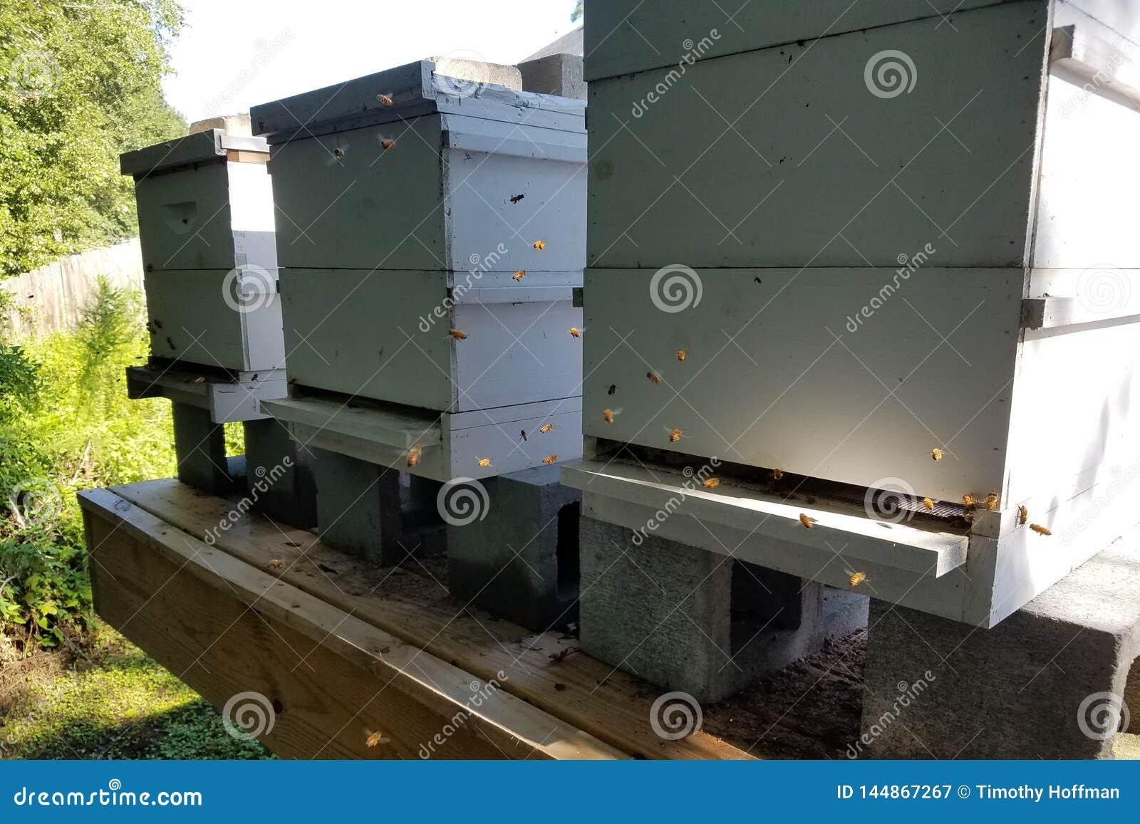 La lumière du soleil illumine le vol Honey Bees At Bee Hives
