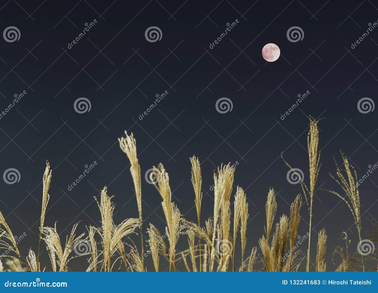 La Luna Llena y la hierba de plata en el otoño, que es una escena que hace que el pueblo japonés siente nostálgico