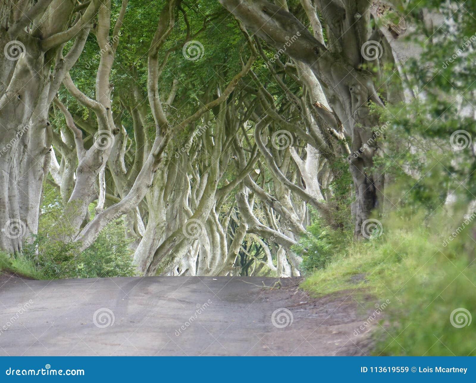 La luz etérea en la oscuridad cerca como se ve en The Game de los tronos Irlanda