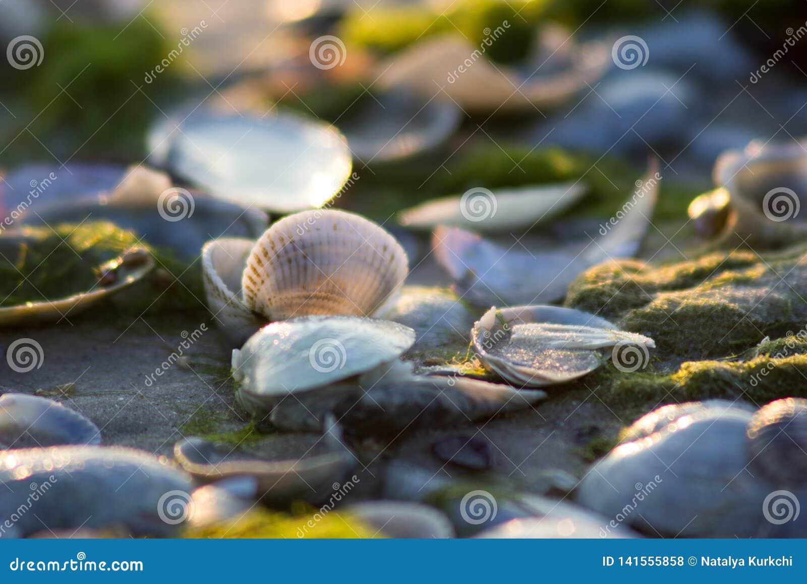 La luz suave en la costa de mar penetra cáscaras