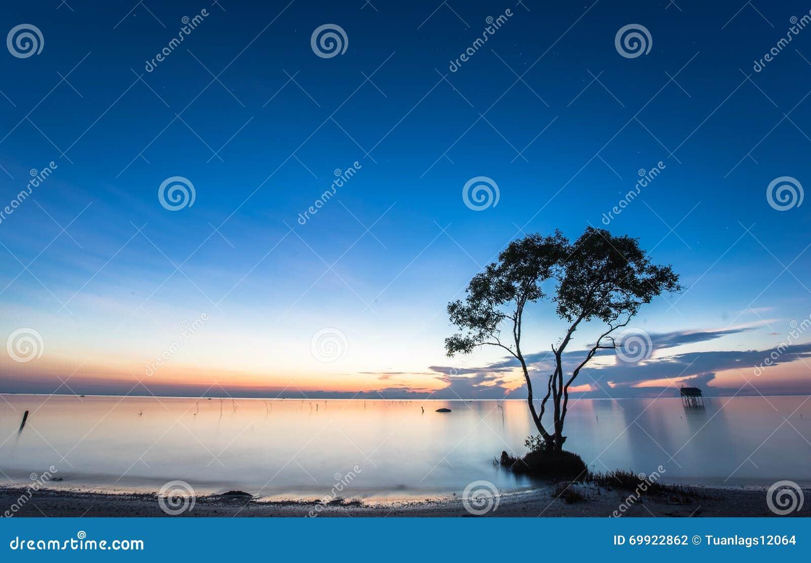 La mañana hermosa ajardina con el cielo azul en la playa
