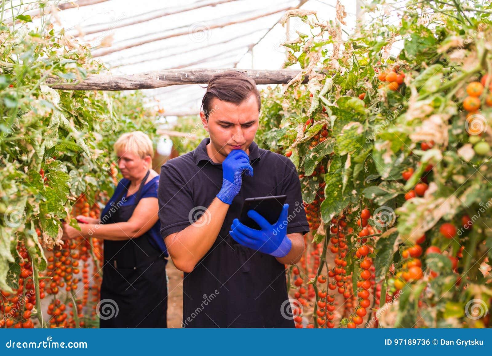 La madre ed il figlio con la compressa controllano gli ordini online del raccolto del pomodoro ciliegia nell affare di famiglia d