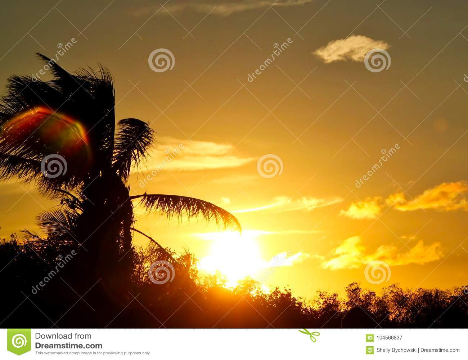 La mancha solar coloreada arco iris asoma sobre hojas de palma en cielo de la puesta del sol en llave del maratón